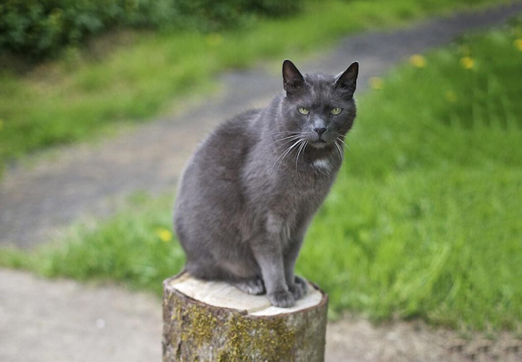 feline blockage
